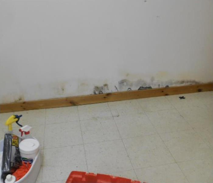 Mold Remediation Top 3 Benefits of Completing a Commercial Mold Inspection