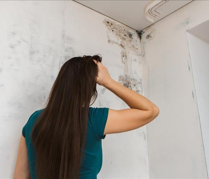 Mold Remediation At-Risk Items for Mold Growth in Your Home
