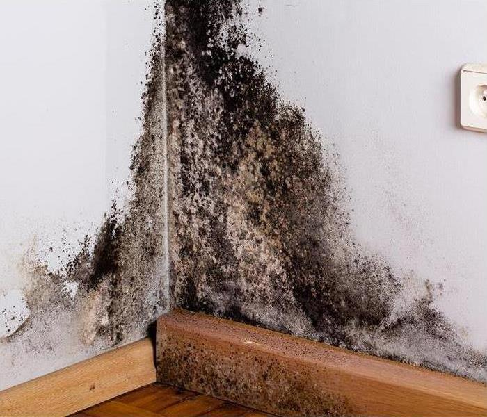 Mold Remediation Keeping Your Bathroom Mold-Free